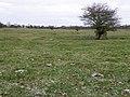 The Abbey Field - geograph.org.uk - 1705110.jpg