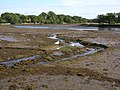 The Beaulieu River at low tide, New Forest - geograph.org.uk - 62587.jpg