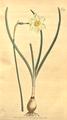 The Botanical Magazine, Plate 379 (Volume 11, 1797).png