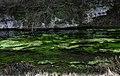 The River Lathkill - geograph.org.uk - 42.jpg