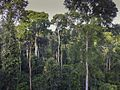 The forest from the Canopy Walkway - Kakum NP - Ghana14 IMG 0812 (16009308540).jpg