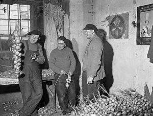 Onion Johnny - Stringing onions in Porthmadog, Wales (1958)