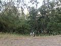 Thirumullaivasal Forest.jpg