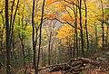 Thousand Step Trail (5) (30638336336).jpg
