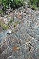 Thunderhead Sandstone (Neoproterozoic; Clingmans Dome, Great Smoky Mountains, North Carolina, USA) 1 (36874867771).jpg