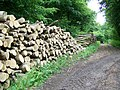 Timber, Fontmell Woods - geograph.org.uk - 1360207.jpg