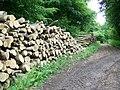 Timber, Fontmell Woods - geograph.org.uk - 1360207.jpg
