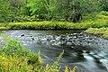 Tobyhanna Creek (6) (21178697960).jpg