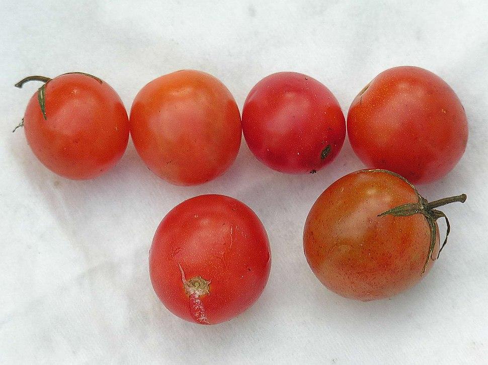 Tomates Bastavales Galicia
