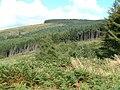 Towards Rhiw Tor Cymry - geograph.org.uk - 53531.jpg