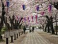 Toyokawa-shi Sakura 20070404 0543.jpg