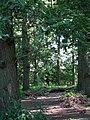 Track into Marlpit Plantation - geograph.org.uk - 554076.jpg