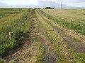 Track to East Brogan - geograph.org.uk - 499024.jpg