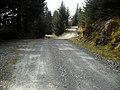Tracks in Ardgartan Forest - geograph.org.uk - 1285885.jpg
