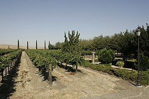Tracy, California - Tracy vineyard