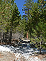 Trail Canyon trail 2.jpg