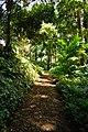 Trail to Aihualama Falls (5170645503).jpg