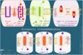 Trasporti transmembranosi.png