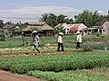Travaux des champs Vietnam.JPG