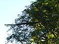 TreeSnake.jpg