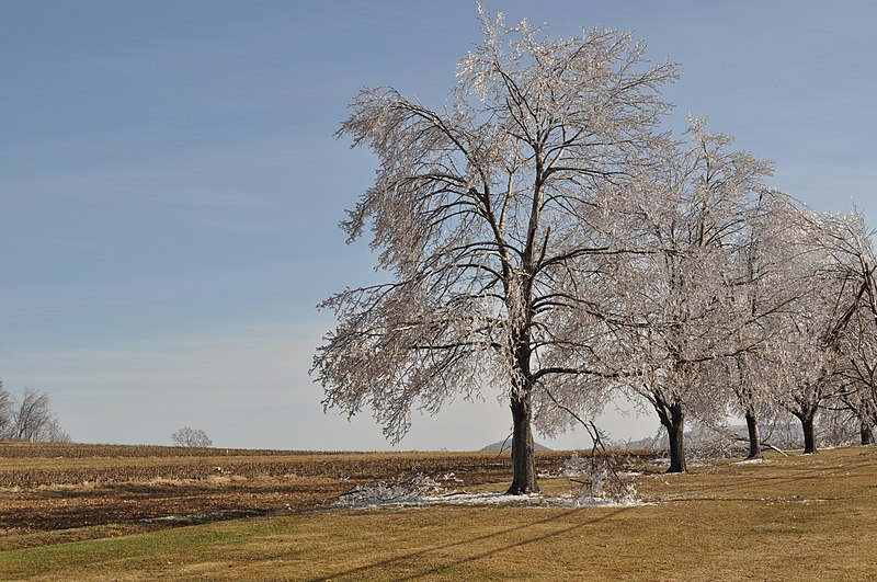 File:Trees after ice storm NY 82 2.JPG