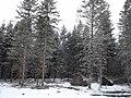 Trees and snow fall - panoramio.jpg