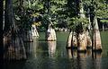 Trees at Big Thicket National Preserve.jpg
