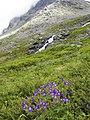 Trollstigen - panoramio (2).jpg