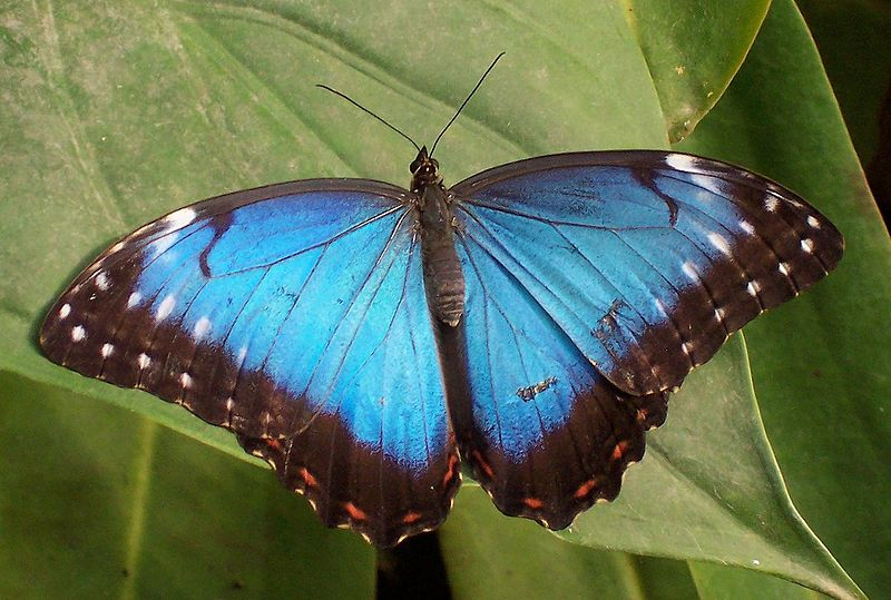 File:Tropical butterfly.jpg