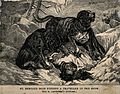 Two St. Bernard dogs find an unconscious man in the snow and Wellcome V0015199.jpg
