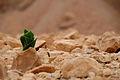 Tze'elim Canyon 16381 (11852195953).jpg