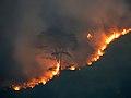 UG-LK Photowalk - 2018-03-24 - Wildfire near Kataboola (5).jpg