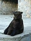 Urso-pardo no zoo de Lisboa.JPG