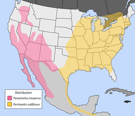Us pipistrelle bat distribution.png