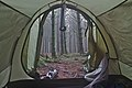 View from a tent in the woods by Route de l'Ancienne Douane in Stavelot, Belgium (sensor is fogged, DSCF3615).jpg