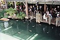 View from the Mark Twain Riverboat.jpg