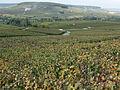 Vignes (Coteaux de Festigny.51) Cl.J.Weber02 (23309721539).jpg