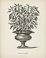 Vintage illustrations by Benjamin Fawcett for Shirley Hibberd digitally enhanced by rawpixel 24.jpg