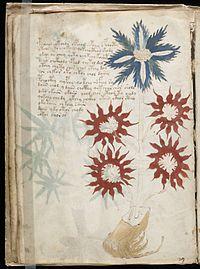 Voynich Manuscript (32).jpg