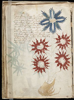 Voynich manuscript - A floral illustration on page 32