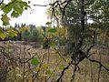 Vozhegodskiy r-n, Vologodskaya oblast', Russia - panoramio (38).jpg