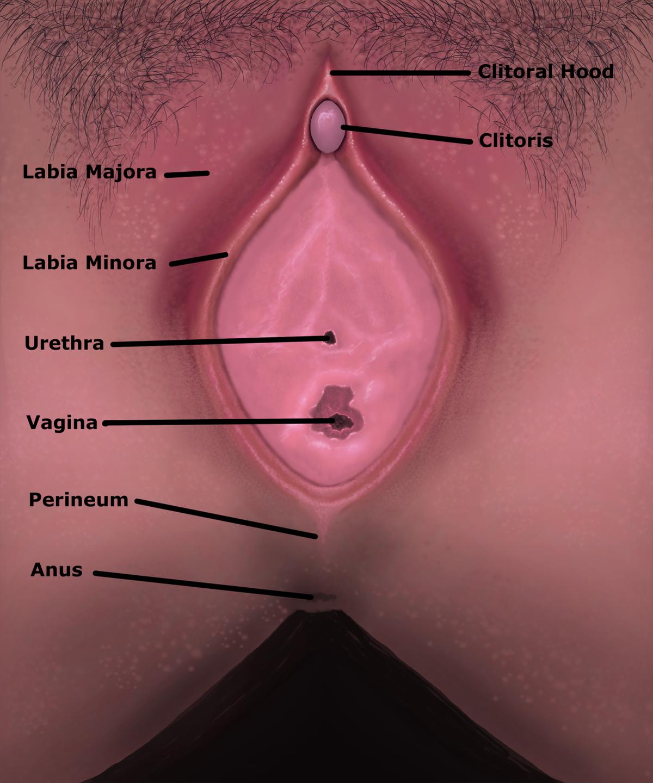 Vagina - Wikipedia bahasa Indonesia, ensiklopedia bebas