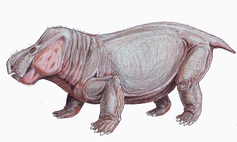 Wadiasaurus1DB