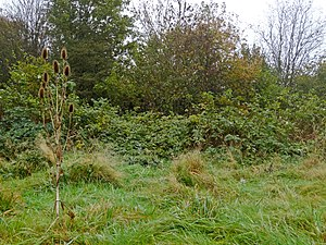 Woodland edge - Natural woodland edge development through succession of an abandoned meadow