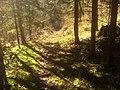 Waldweg-Stainach02.jpg