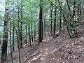Wanderweg zur Wegelnburg 11.jpg
