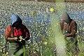 Waterblommetjie pickers (7808722170).jpg