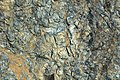 Weathered serpentinite (East Dover Ultramafic Body, Ordovician; Copperhead Road quarry, near East Dover, Vermont, USA) 8.jpg