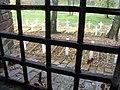 Widok z okna celi obozu na cmentarz w Rotundzie Zamojskiej.jpg