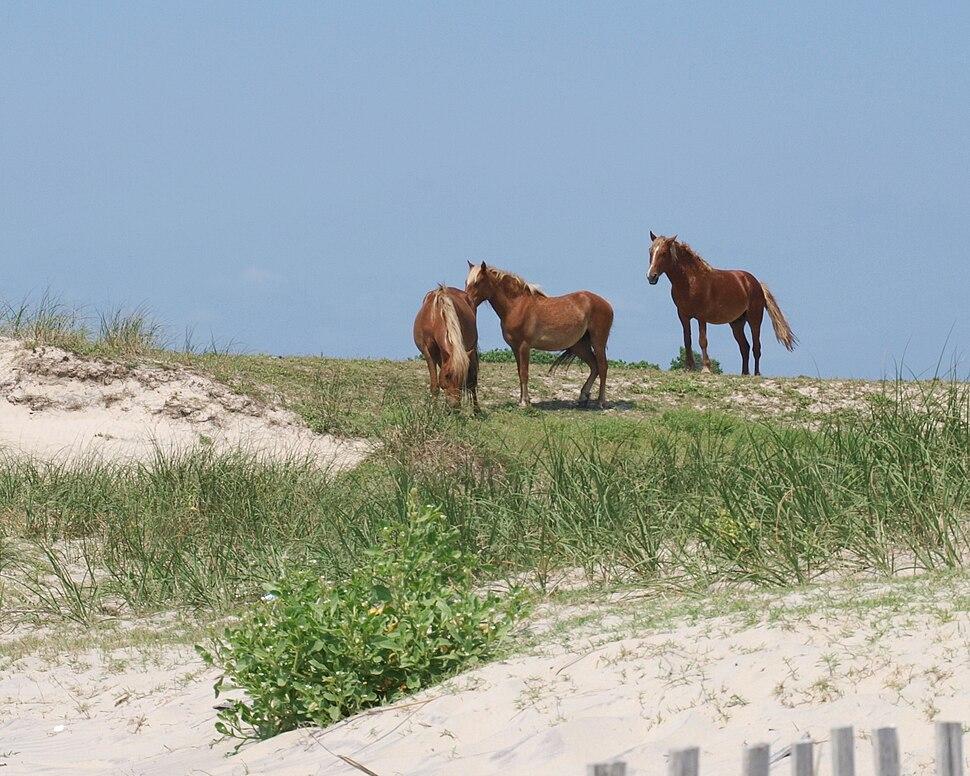 Wild Spanish Colonial Mustangs